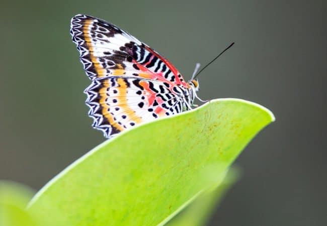Papillon sur une plante à Honfleur