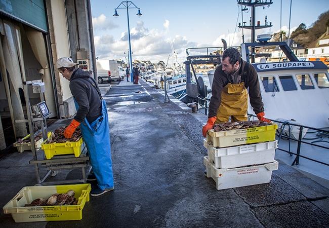 Les pêcheurs reviennent de la pêche aux coquilles-saint-jacques