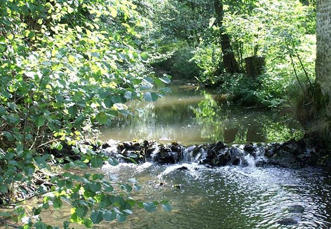Cours d'eau dans la vallée de la baize