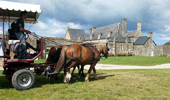 Attelage de chevaux dans le Calvados