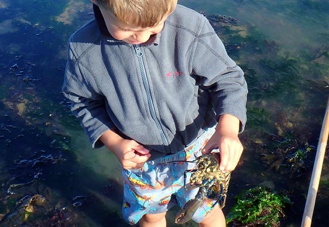 Enfant avec un homard à la plage dans le Calvados en Normandie
