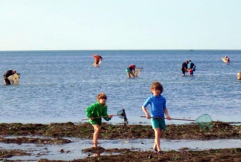 Enfants et adultes faisant de la pêche à pied dans le Calvados en Normandie.