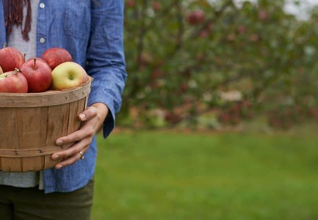 Calvados Time les pommes