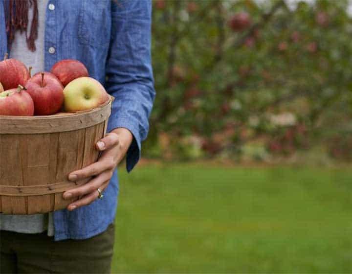Femme tenant un sceau de pommes du Calvados