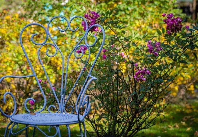 Une chaise devant un massif de roses de La roseraie du jardin de Jumaju à Montchamps