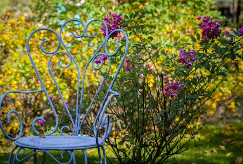 La roseraie du jardin de Jumaju à Montchamps