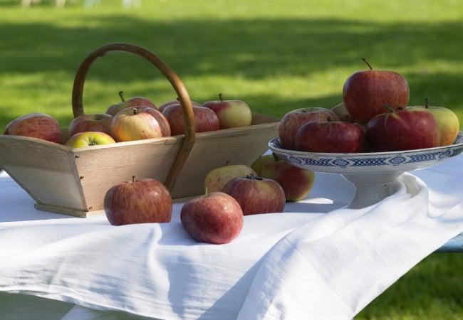 Pommes et panier de pommes sur une table avec nappe blanche dans un verger