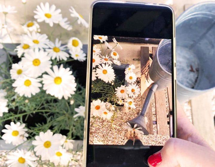 Prise de photographie de jardin