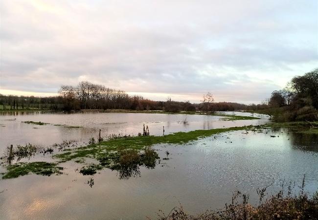Un champ recouvert d'eau