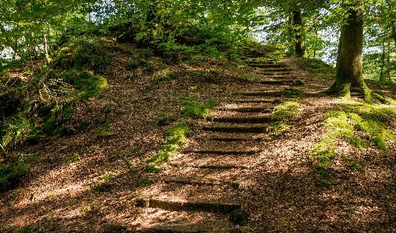 Un escalier dans la forêt