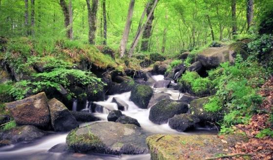 Forêt avec une cascade
