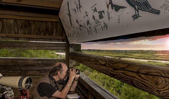Homme regardant les oiseaux avec des jumelles